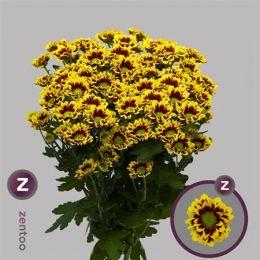 Хризантема Раїза (бордова з жовтим ободком)
