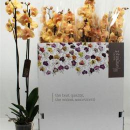 Орхідея Оранжева (2) 80см