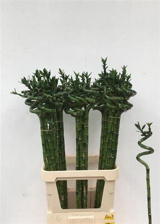 Бамбук 90см