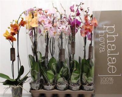 Орхідея 2309 мікс (2) 80