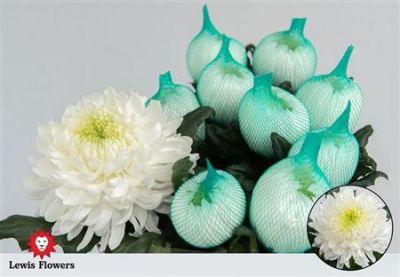 Хризантема Магнум біла (1 бутон)